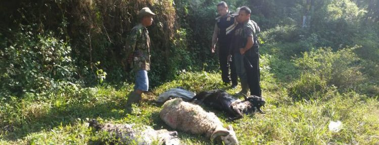 Ditemukan 3 Domba Mati di Cadas Pangeran